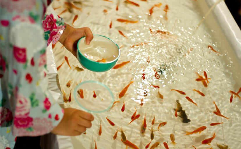 金魚すくいをする女の子(フリー写真)