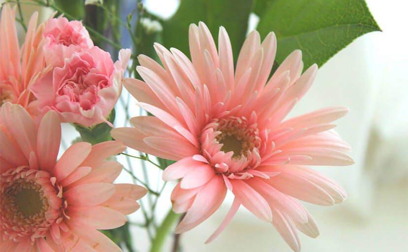 お見舞いの花(フリー写真)