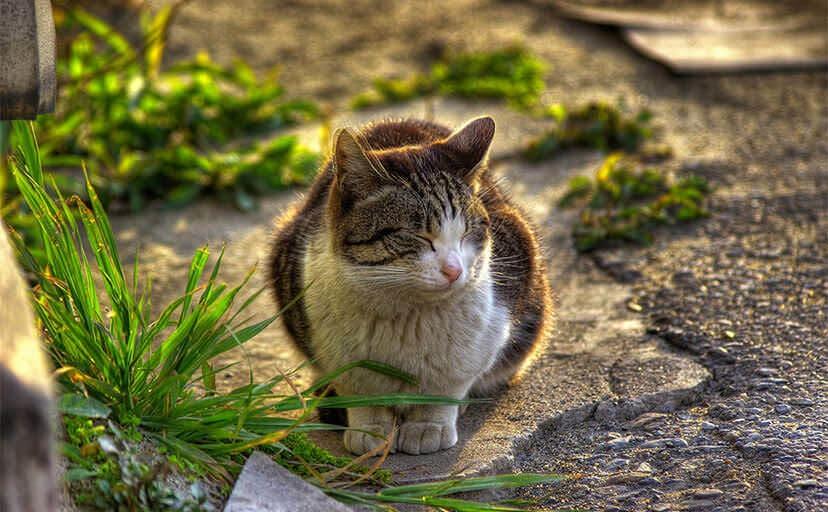 野良猫(フリー写真)