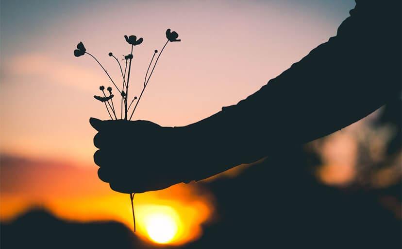 夕日と花を掴む手(フリー写真)