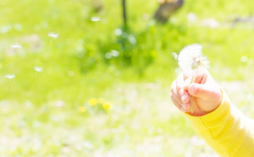 たんぽぽを持つ手(フリー写真)