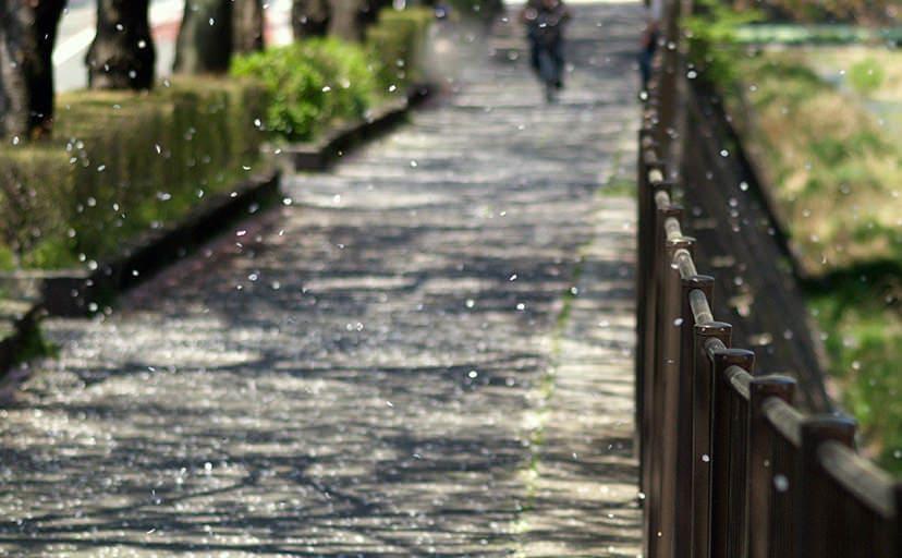 春の路地(フリー写真)
