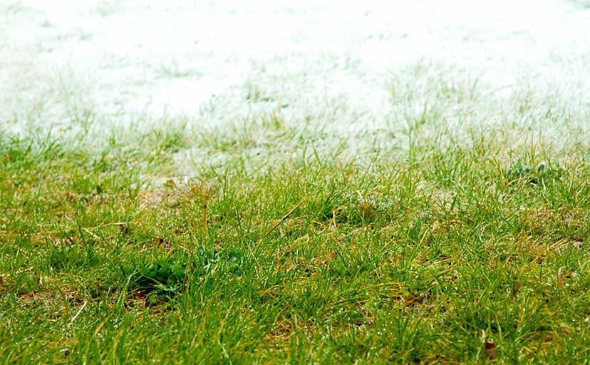 冬と春の境界(フリー写真)