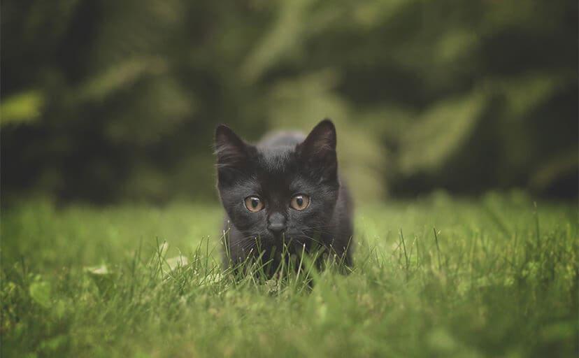 黒猫(フリー写真)