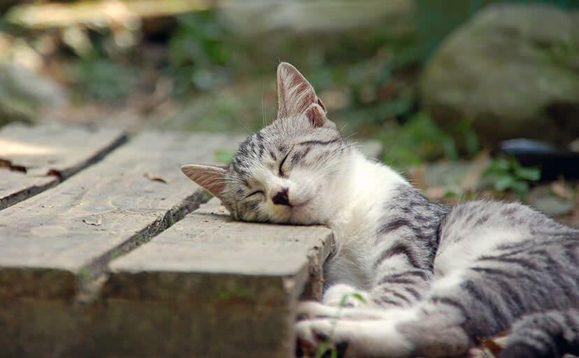 子猫(フリー写真)