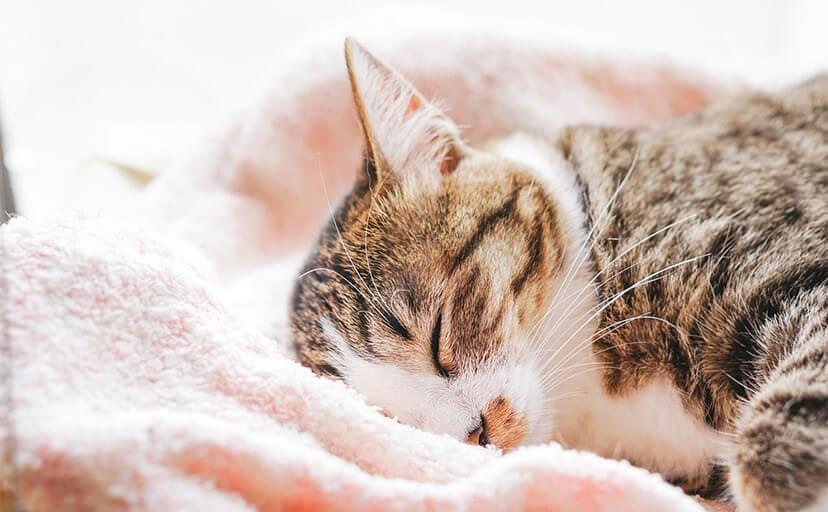 眠る猫(フリー写真)